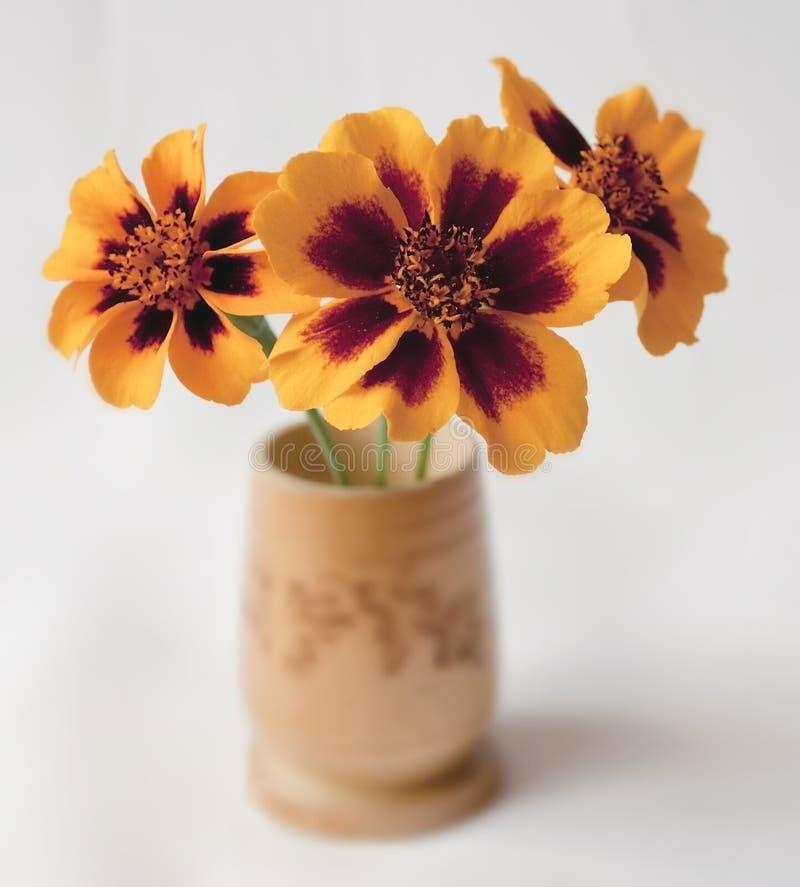 Três marigolds imagem de stock royalty free