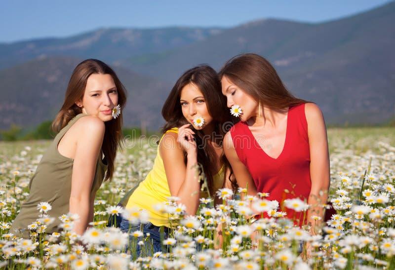 Três meninas no campo da camomila fotos de stock