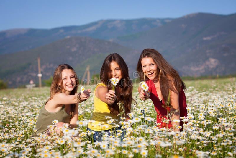 Três meninas no campo da camomila foto de stock