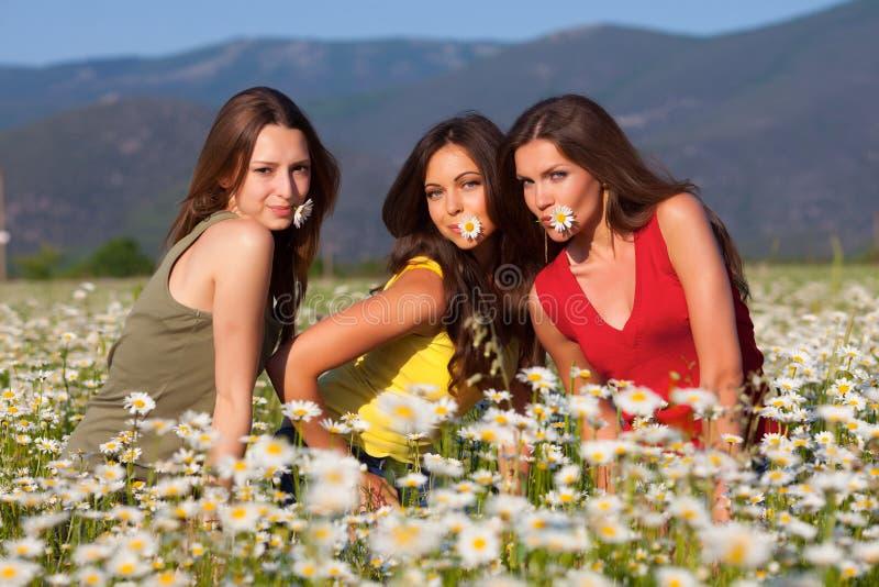Três meninas no campo da camomila foto de stock royalty free