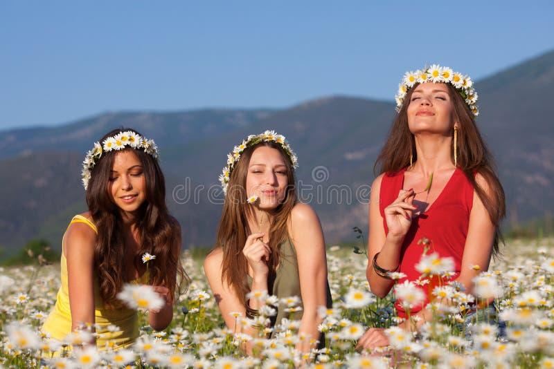 Três meninas no campo da camomila fotografia de stock royalty free