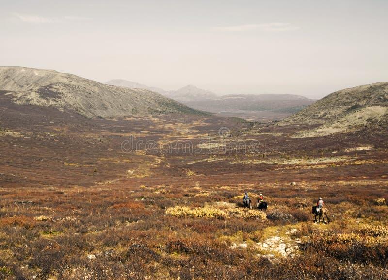 Três meninos de Tsaatan retornam a sua casa nômada, Mongólia fotos de stock royalty free