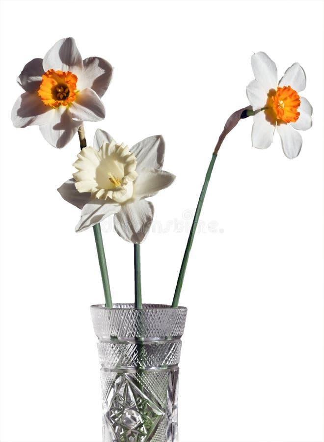 Três narcisos amarelos diferentes em um ramalhete em um vaso de cristal em um fundo branco fotos de stock royalty free