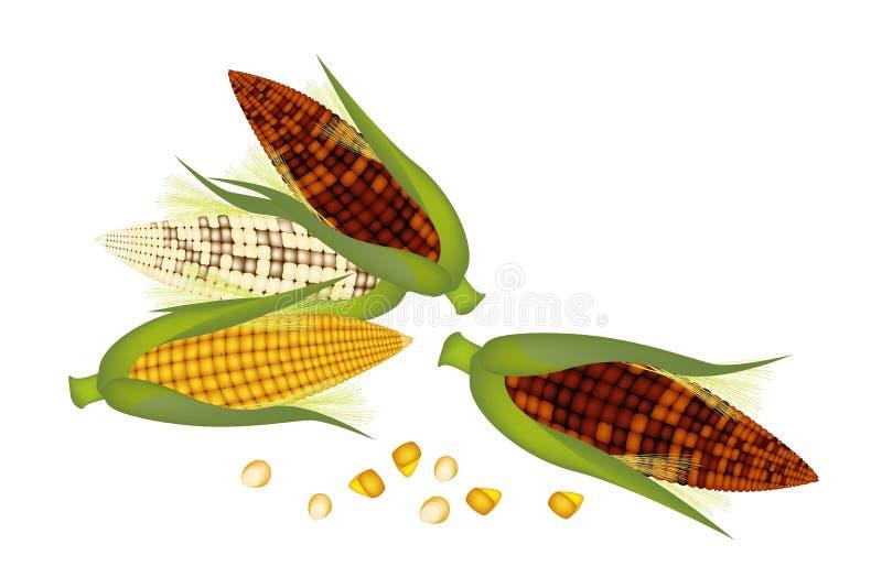 Três orelhas de milho com casca e seda ilustração royalty free
