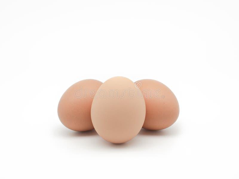 Três ovos isolados no fundo branco Front View fotos de stock royalty free
