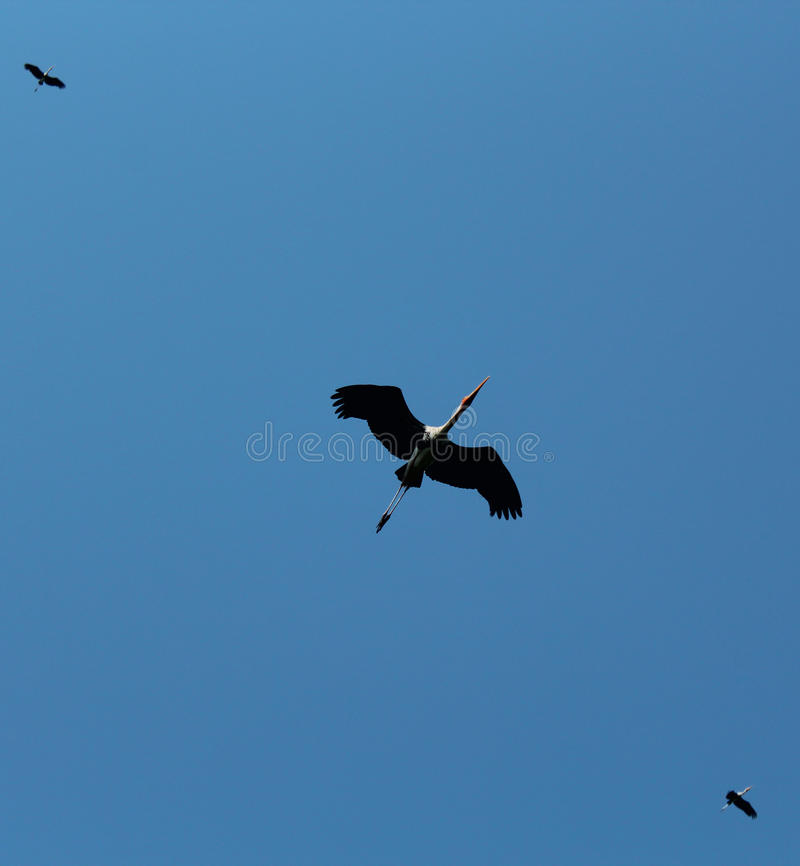 Três pássaros fotografia de stock royalty free
