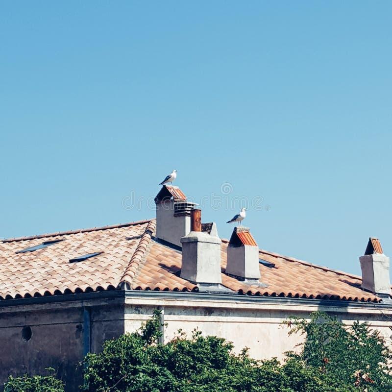 Três pássaros pequenos no sul de França, Toulon imagem de stock