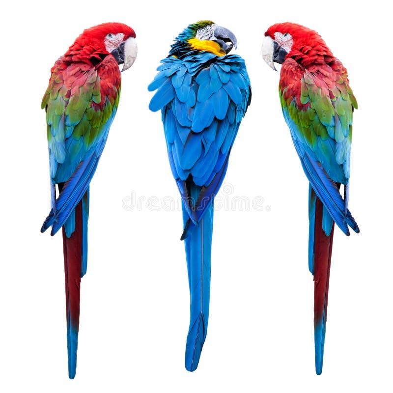 Três papagaios fotos de stock