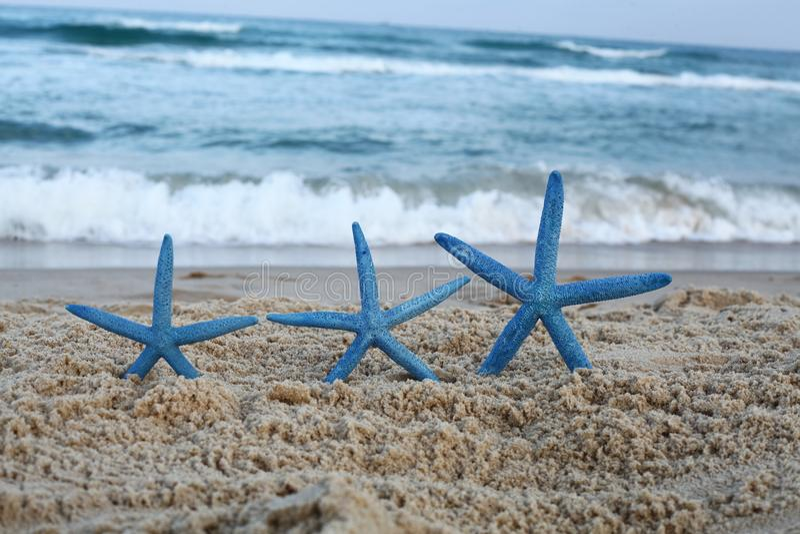 Três peixes da estrela azul na praia imagem de stock