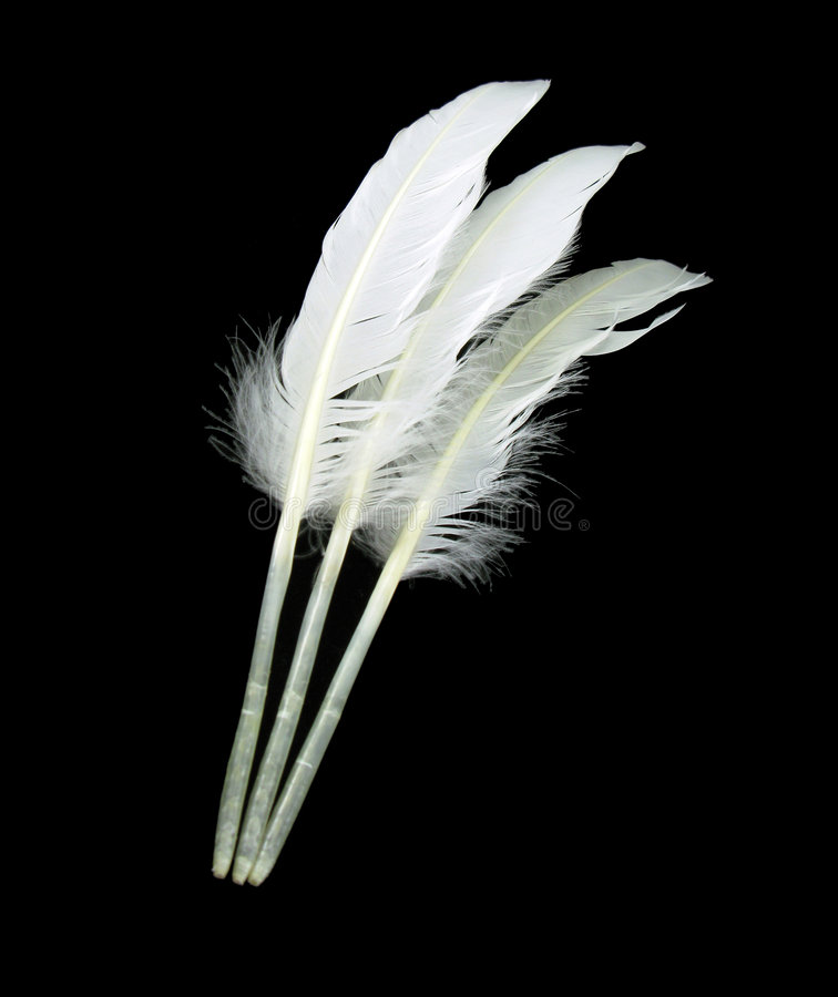 Três penas da cisne fotografia de stock royalty free