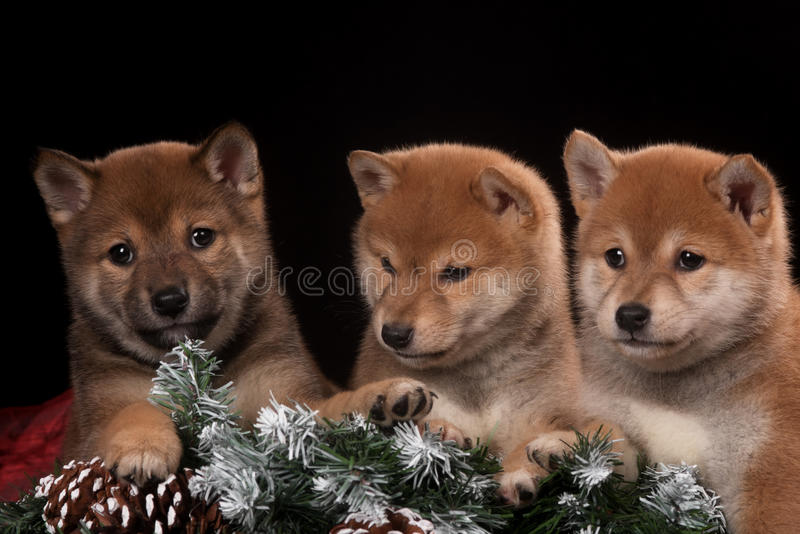 Três pequenos e cachorrinho bonito no estúdio do Natal fotos de stock royalty free