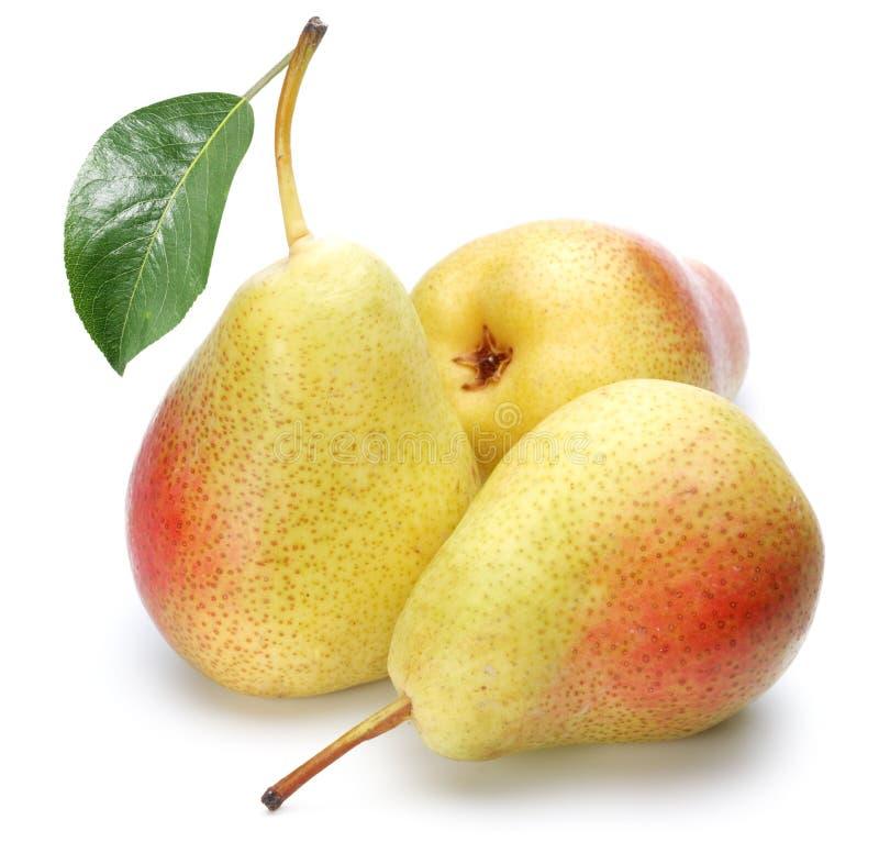 Três peras maduras. imagem de stock royalty free