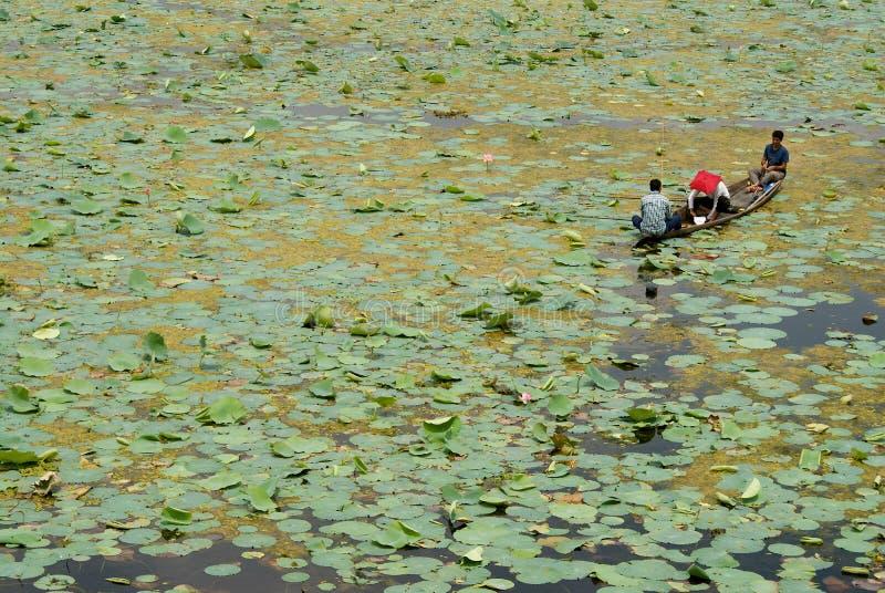 Três pescadores no lago Dal, Srinagar, Índia imagem de stock