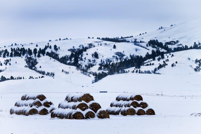 Três pilhas Hey de pacotes nevado foto de stock royalty free
