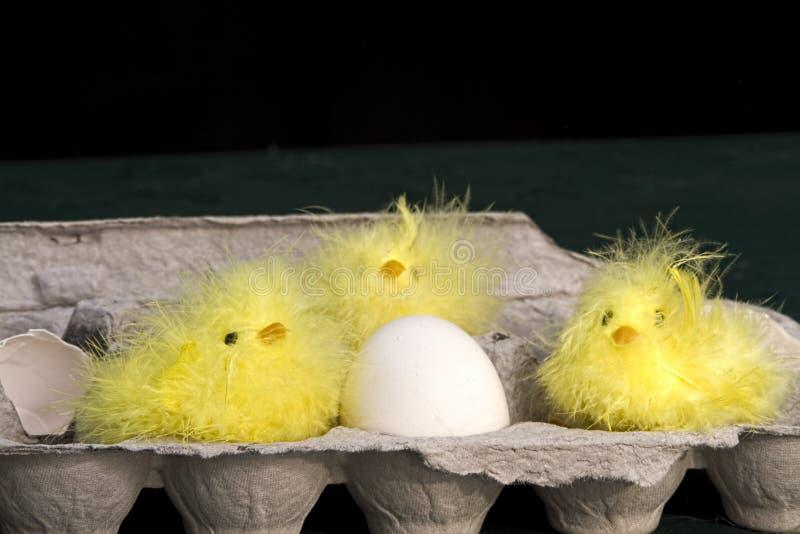 Três pintainhos na caixa do ovo fotos de stock