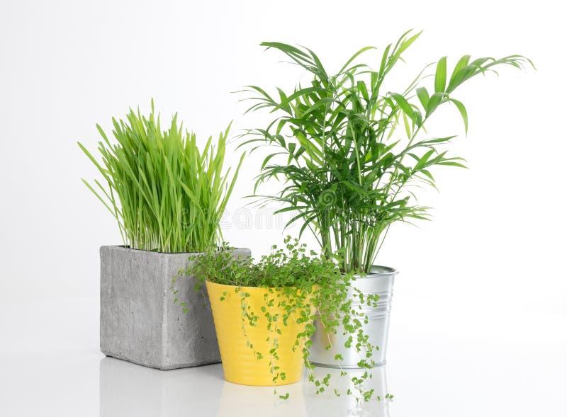 Três plantas brilhantes em uns potenciômetros foto de stock