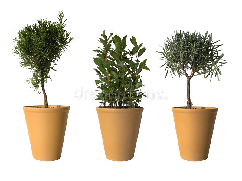 Três plantas potted foto de stock royalty free