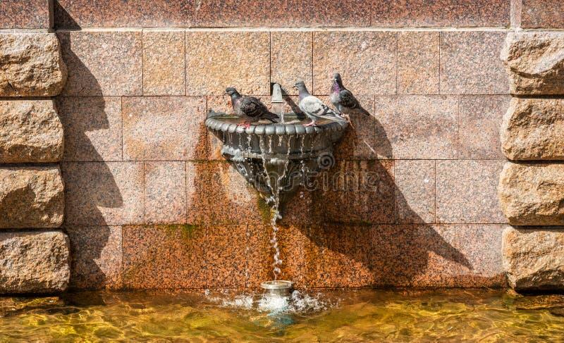 Três pombos sentam-se em um banho foto de stock royalty free