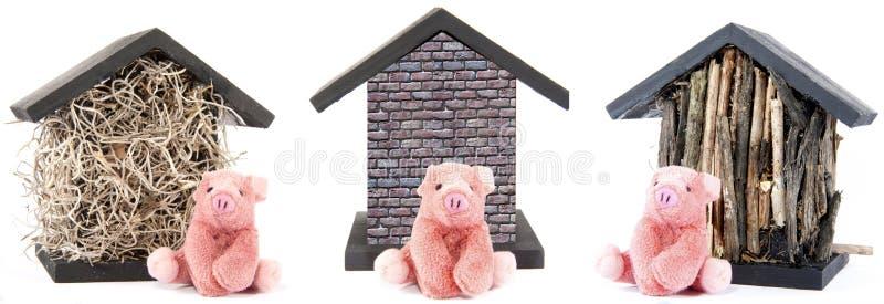 Três porcos pequenos fotos de stock
