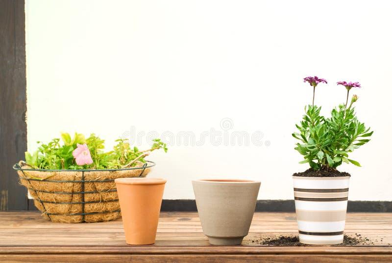Três potenciômetros de flor em uma fileira imagem de stock