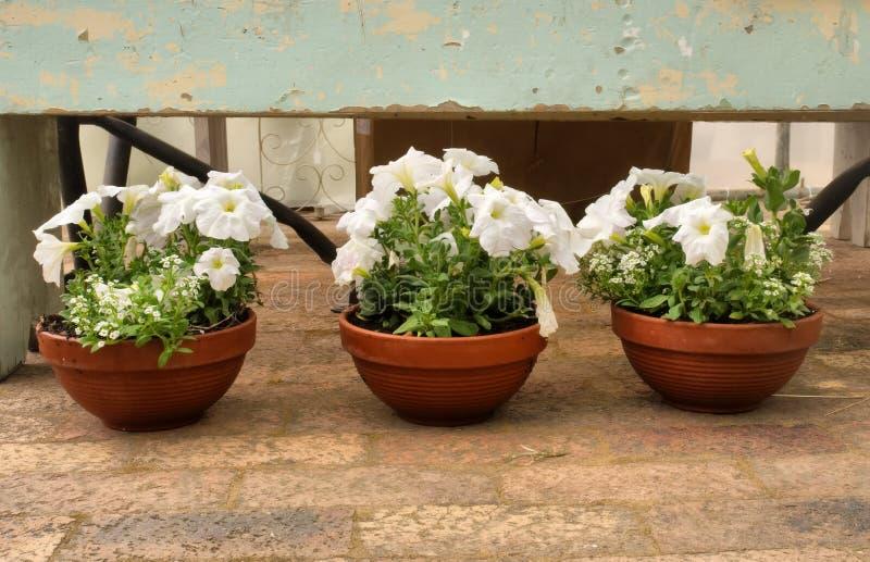 Download Três Potenciômetros De Flor Imagem de Stock - Imagem de home, flor: 29839837