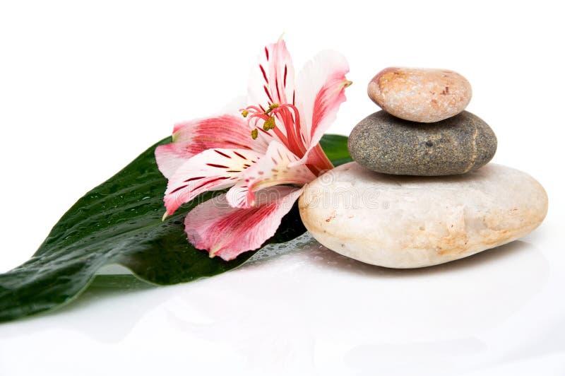 Três rochas, folhas e flores fotos de stock royalty free