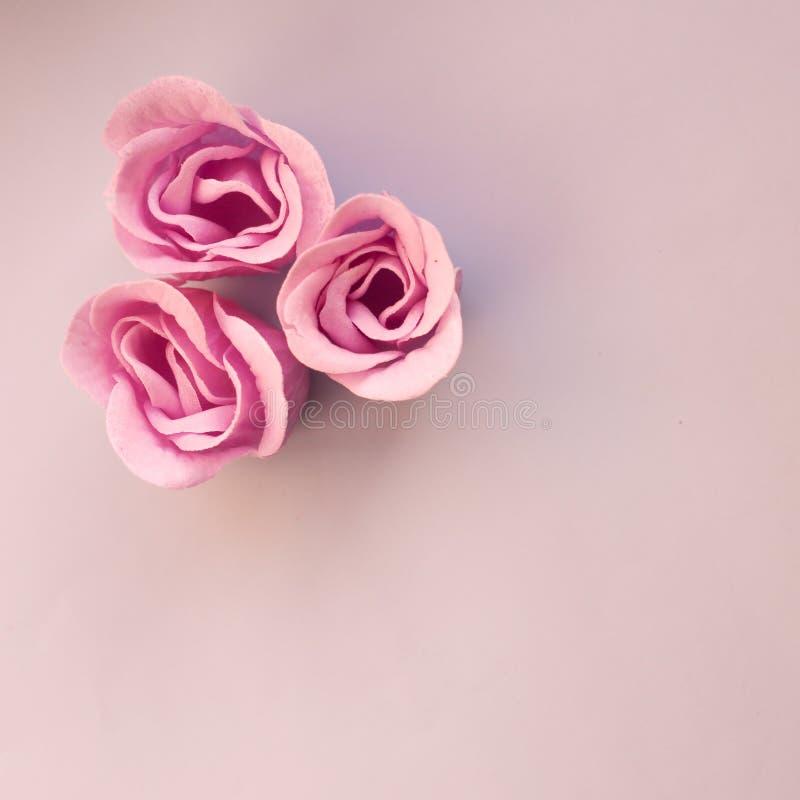 Três rosas cor-de-rosa em claro - fundo azul com espaço da cópia fotos de stock royalty free