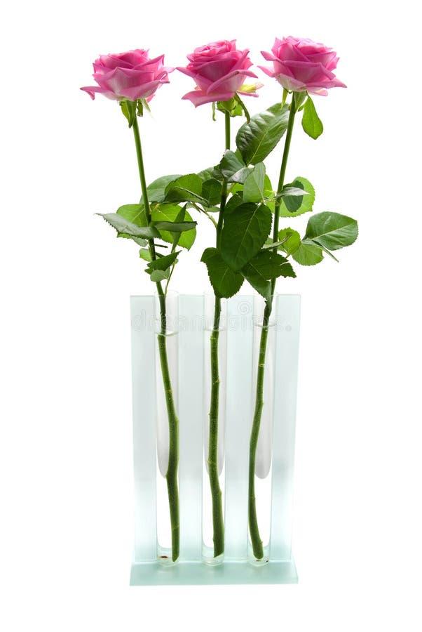 Download Três Rosas Cor-de-rosa No Vaso De Vidro Imagem de Stock - Imagem de levantou, três: 10066559
