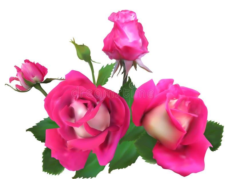 Três rosas e botões cor-de-rosa brilhantes isolados no branco ilustração stock