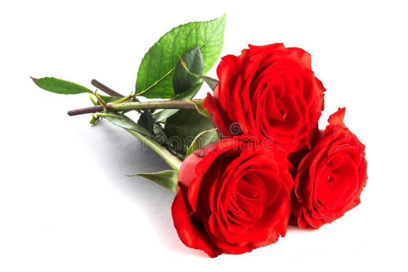 Três rosas no branco fotografia de stock royalty free