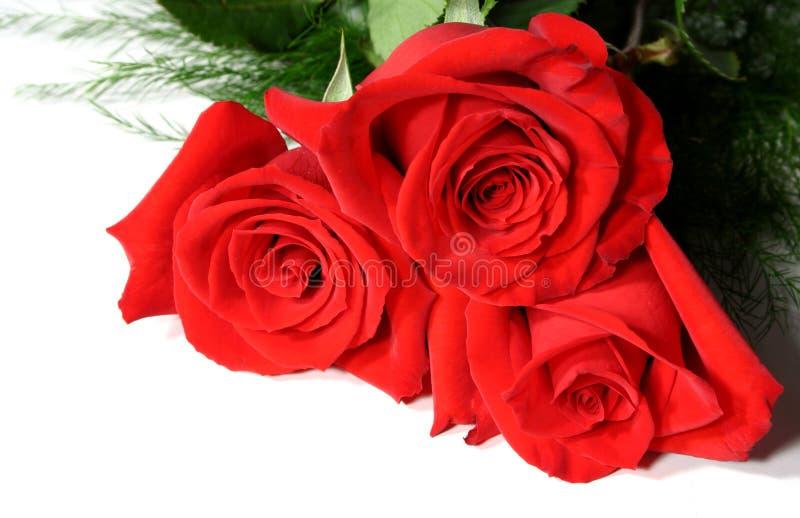 Três rosas vermelhas fotografia de stock royalty free