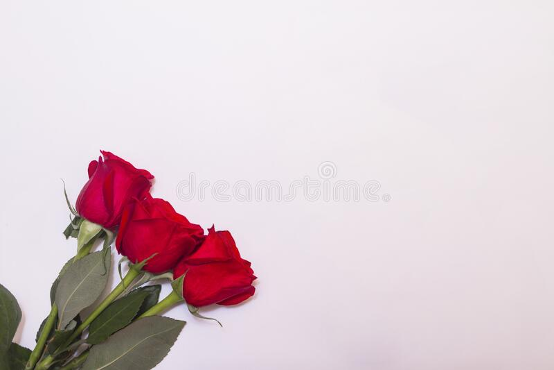 Três rosas vermelhas no fundo branco com a vista superior do espaço de cópia fotos de stock royalty free
