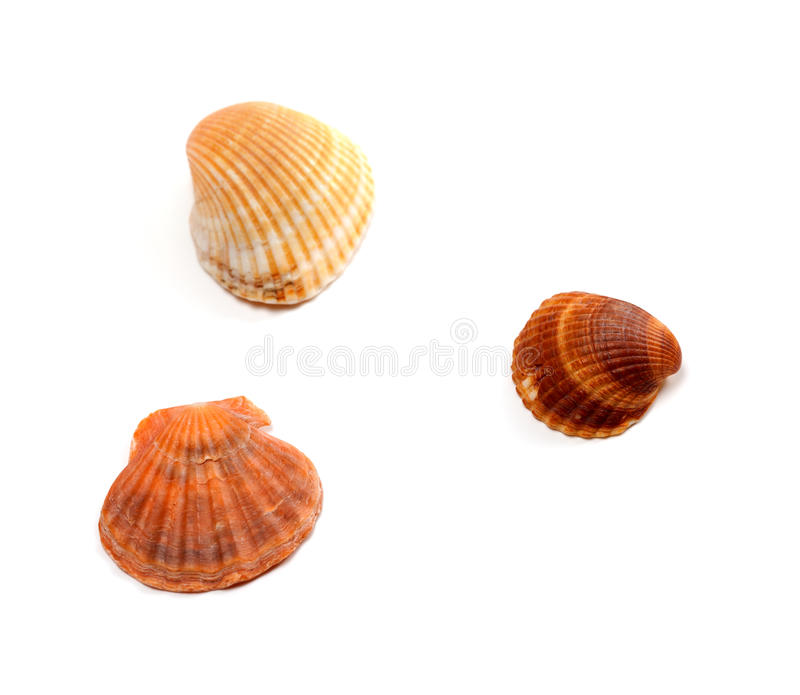 Três seashells fotos de stock royalty free