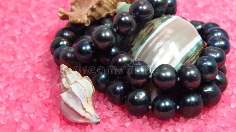 Três shell diferentes do mar na pérola cor-de-rosa e preta imagens de stock