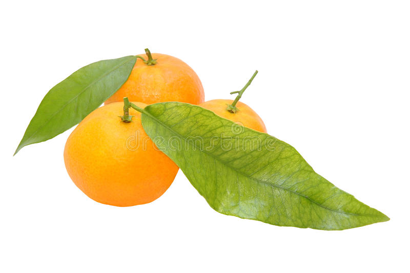 Três tangerinas frescas com os leafes verdes isolados no backg branco fotos de stock