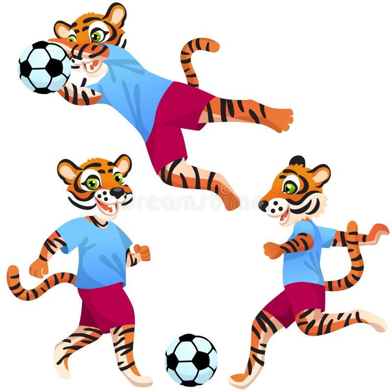Três tigres como jogadores de futebol de uniforme em poses dinâmicas com a bola de futebol ilustração royalty free