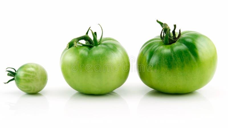 Três tomates verdes maduros na fileira isolada no branco imagens de stock