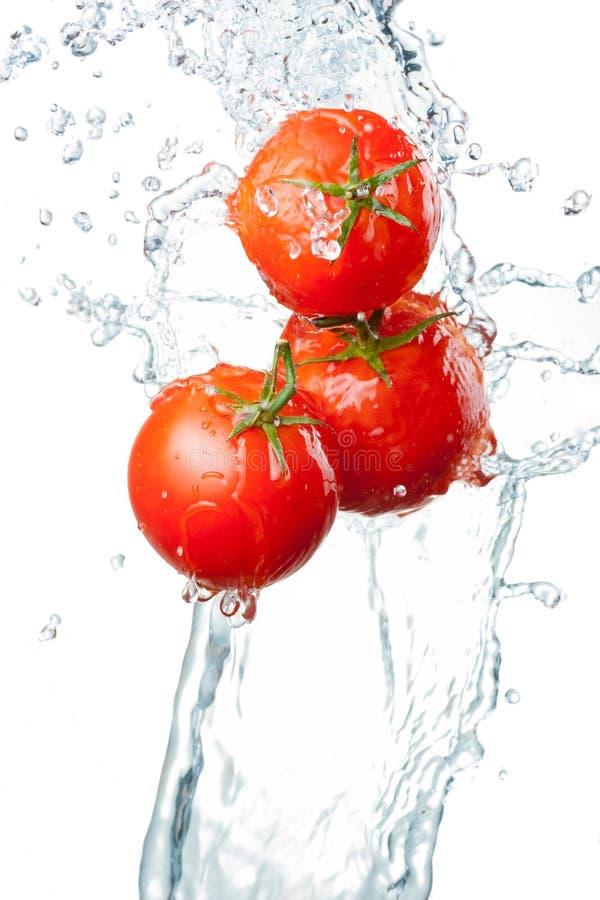 Três tomates vermelhos frescos no respingo da água isolado nos vagabundos brancos imagem de stock
