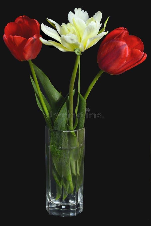Três tulipas vermelhas e amarelas bonitas em um vaso de vidro no preto fotos de stock