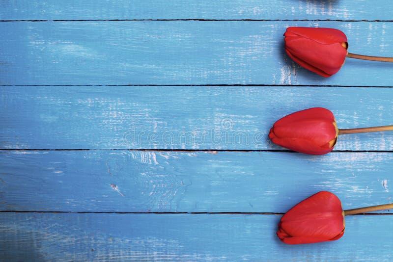 Três tulipas vermelhas em uma superfície de madeira azul fotografia de stock