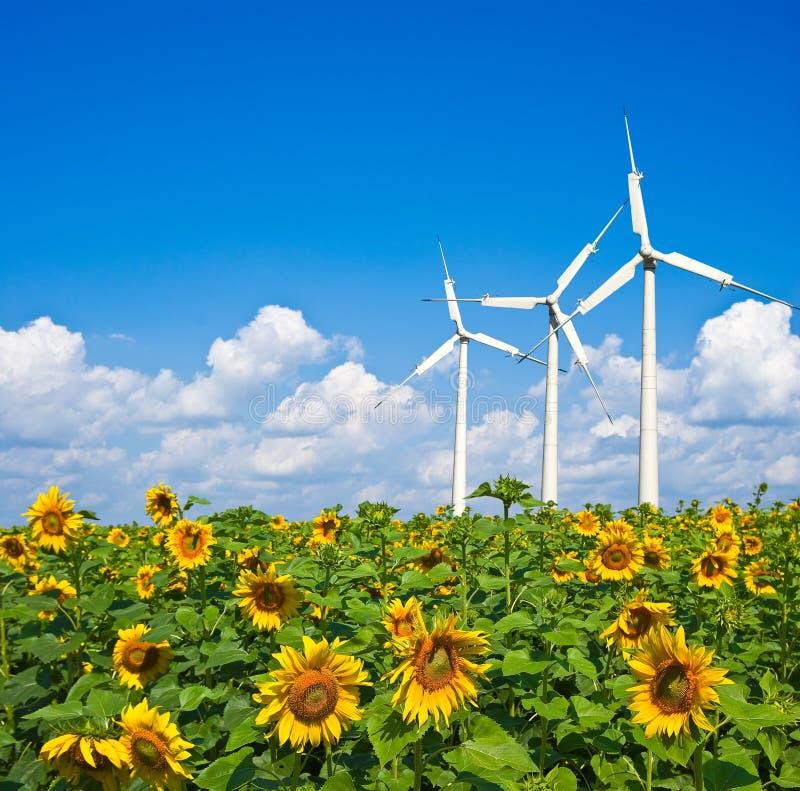 Três turbinas de vento no girassóis imagem de stock royalty free