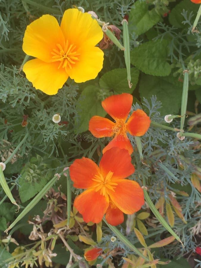 Trío de la flor fotografía de archivo