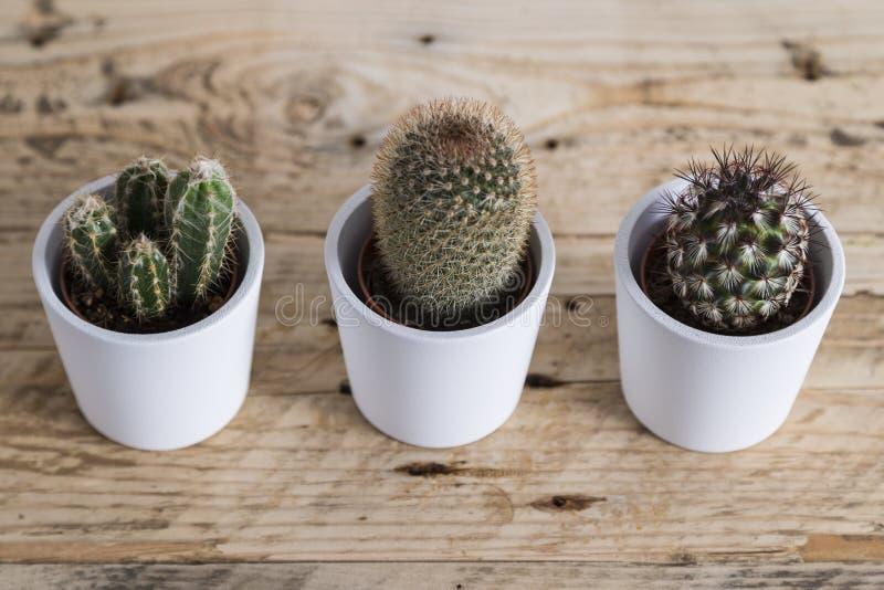 Trío de la planta del cactus imagen de archivo libre de regalías