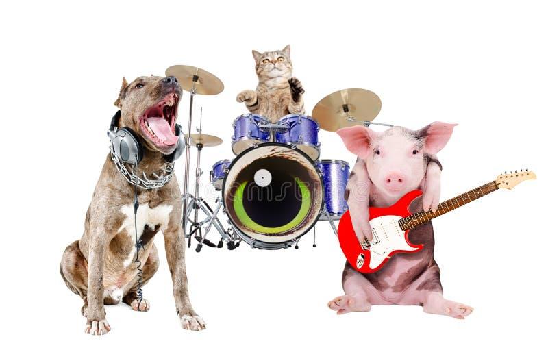 Trío de los músicos animales imagen de archivo