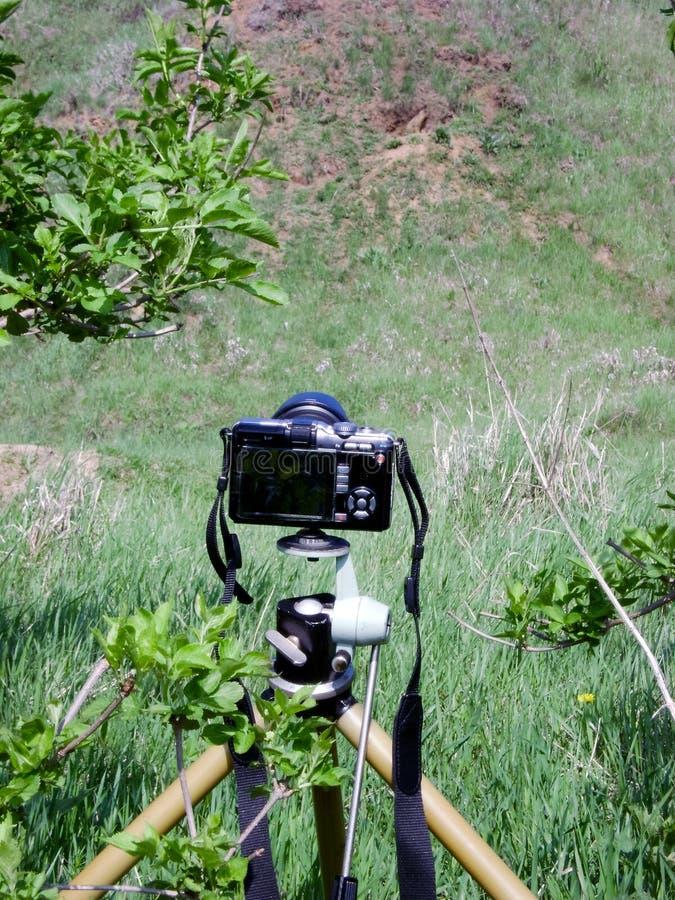 Trípode - un elemento necesario en el trabajo del fotógrafo salvaje de la naturaleza foto de archivo