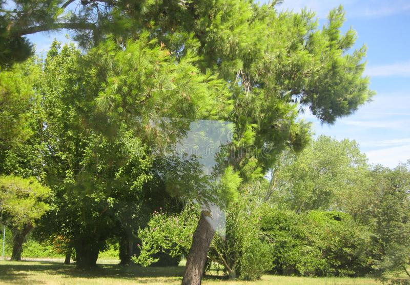 Trójbok po środku drzewa obraz royalty free