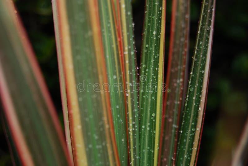 Tröpfchen auf Blättern lizenzfreies stockfoto