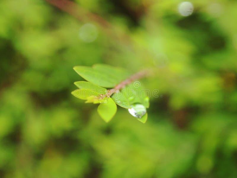 Tröpfchen auf den Trieb und den Blättern lizenzfreie stockfotografie