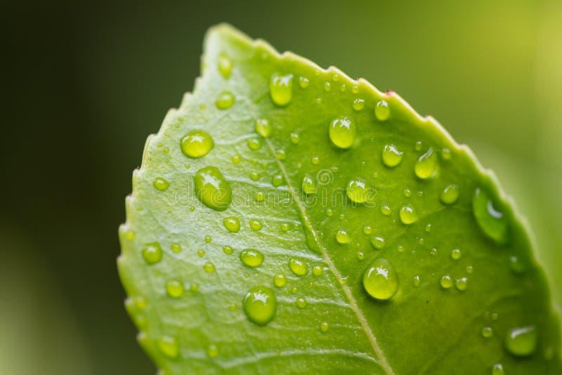 Tröpfchen auf grünem Blatt stockbilder
