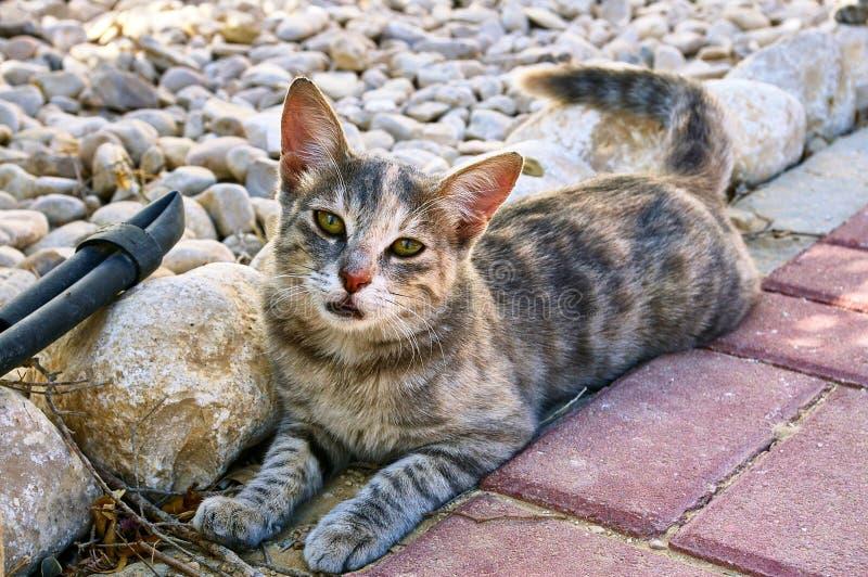 Trötta kattlögner och blickar på dig arkivfoton